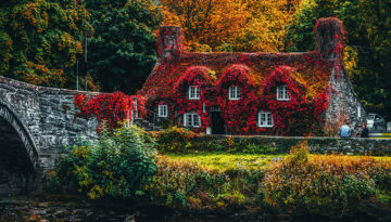 house-covered-with-red-flowering-plant-redux