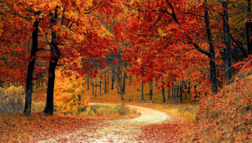 nature-red-forest-leaves-redux